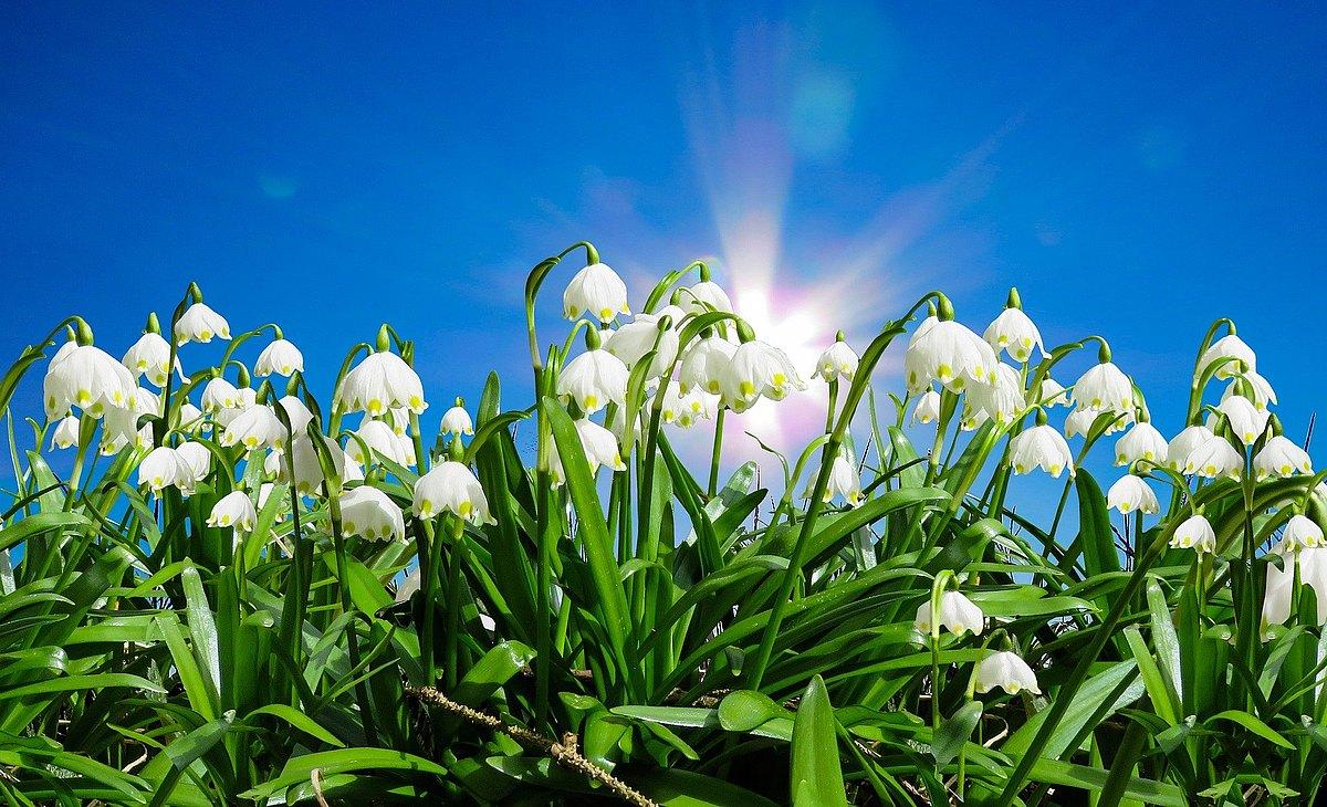 pixabay_Gerhard_G._nature-2113609_1920__1_.jpg